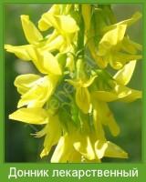 Растение  Донник лекарственный Фото